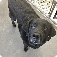 Adopt A Pet :: Zeus - Greensburg, PA