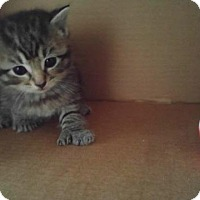 Adopt A Pet :: Robin - Ocala, FL