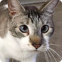 Adopt A Pet :: Cruz - Oakdale, CA
