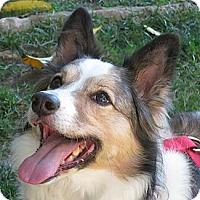Adopt A Pet :: Holly - Monrovia, CA