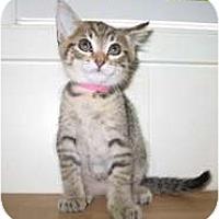 Adopt A Pet :: Becky - Shelton, WA