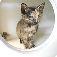 Adopt A Pet :: Peep - Maywood, NJ