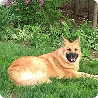 Adopt A Pet :: Brutus - Evergreen Park, IL