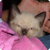 Adopt A Pet :: Nomad - Dallas, TX