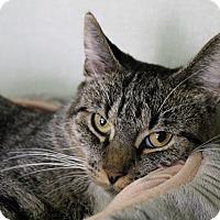 Adopt A Pet :: Gwendolyn - Chicago, IL