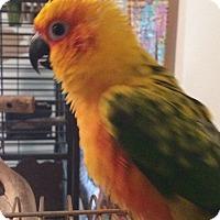 Adopt A Pet :: Sonny - St. Louis, MO