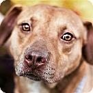 Adopt A Pet :: Scherzo