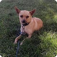 Adopt A Pet :: Keno - Meridian, ID