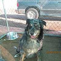 Adopt A Pet :: Ruffles - Anton, TX