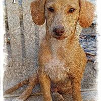 Adopt A Pet :: Epic - Henderson, NV