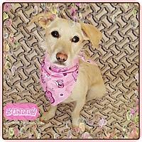 Adopt A Pet :: Bunny - Yucaipa, CA