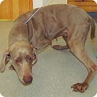 Adopt A Pet :: Mimi - Attica, NY
