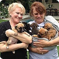 Adopt A Pet :: Gossip Gang - Santa Monica, CA