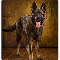 Adopt A Pet :: Bo - Owensboro, KY