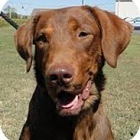 Adopt A Pet :: Cletus - Lewisville, IN