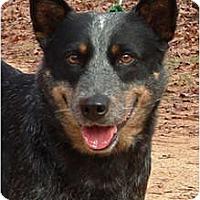 Adopt A Pet :: Windy - Siler City, NC