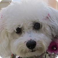 Adopt A Pet :: Missy - La Costa, CA