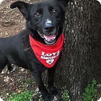 Adopt A Pet :: Jubal - Burleson, TX