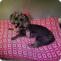 Adopt A Pet :: Remy - Chesterfield, VA