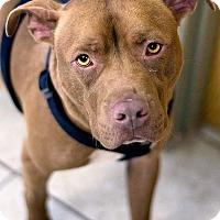 Adopt A Pet :: Logan - Ogden, UT