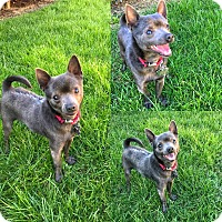 Adopt A Pet :: Batty - Yuba City, CA