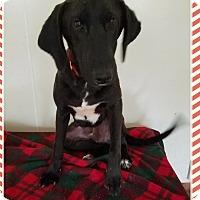 Adopt A Pet :: Lucky Star meet me 3/31 - Manchester, CT
