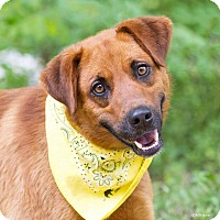 Adopt A Pet :: Rusty - Minneapolis, MN