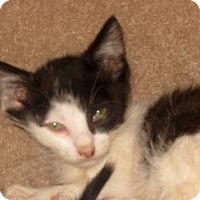 Adopt A Pet :: Ipod - Dallas, TX