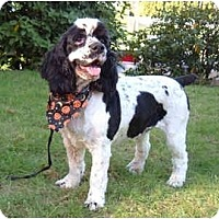 Adopt A Pet :: Freckles - Tacoma, WA