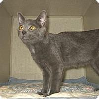 Adopt A Pet :: SMOKEY - 2013 - Hamilton, NJ