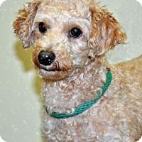 Adopt A Pet :: Derek - Port Washington, NY