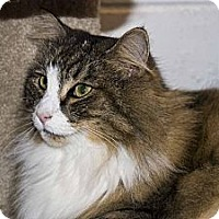 Adopt A Pet :: Holly - New Port Richey, FL