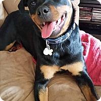 Adopt A Pet :: Sparta - bridgeport, CT