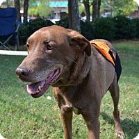 Adopt A Pet :: Millie C - Cumming, GA