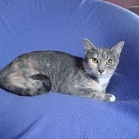 Adopt A Pet :: Anastasia - Sarasota, FL