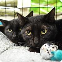 Adopt A Pet :: Cadbury - College Station, TX