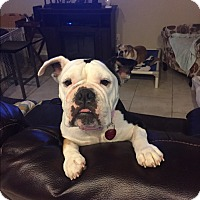 Adopt A Pet :: Brighton - Cibolo, TX