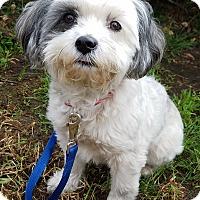 Adopt A Pet :: Pippi - Los Angeles, CA