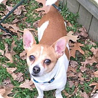 Adopt A Pet :: Bennie - Va Beach, VA