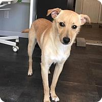Adopt A Pet :: Prince - Harrisonburg, VA