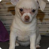 Adopt A Pet :: In-N-Out: Burger - Corona, CA