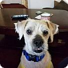 Adopt A Pet :: Cloudy