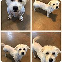Adopt A Pet :: Tess - Longview, TX