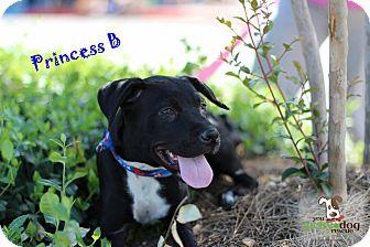 Labrador Retriever Mix Puppy for adoption in Alpharetta, Georgia - Princess Bubblegum