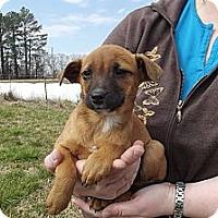 Adopt A Pet :: Bonnie Ruth - Danbury, CT