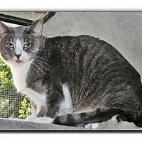 Adopt A Pet :: Gentile Mom - Howell, MI