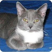 Adopt A Pet :: Fletcher kitten - Cincinnati, OH