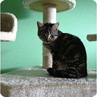 Adopt A Pet :: Lucky Charms - Mobile, AL