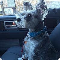 Adopt A Pet :: Harley - Grafton, MA