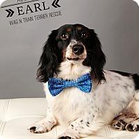 Adopt A Pet :: Earl-Pending Adoption - Omaha, NE